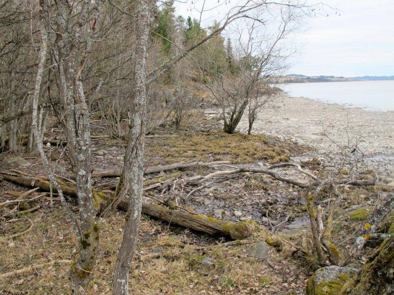 Gamle lenser som ligger å råtner langs Øyerens bredd.