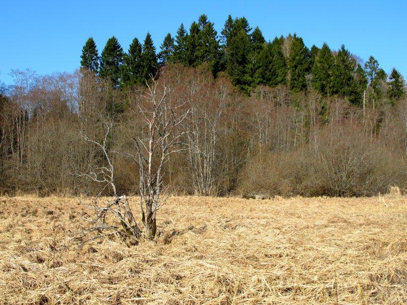 Gjellebekkvika ved Nordby bruk.
