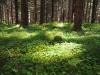 Mosegrodd skog.